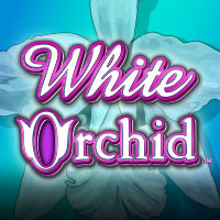 whiteorchid